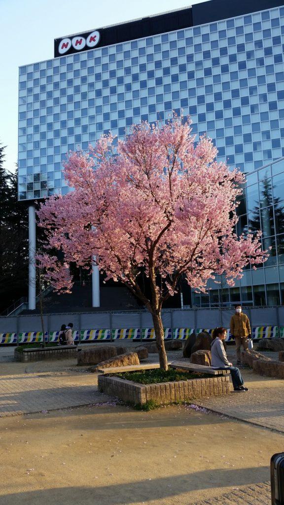 Japan: Mito and Sendai