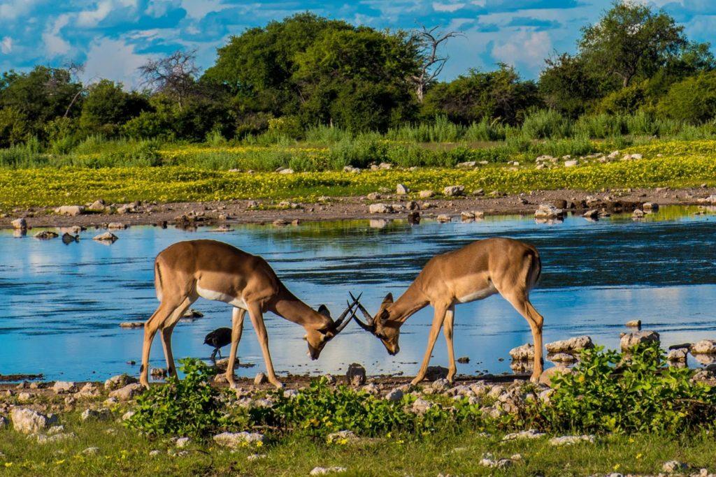 Chobe vs Etosha
