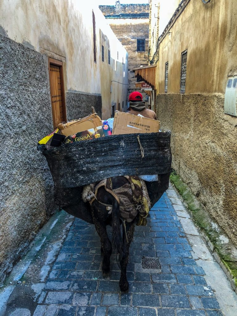 A donkey in an alleyway in Fez, Morocco.