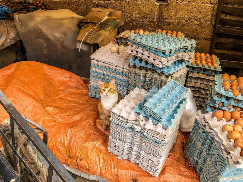 A cat in Fez, Morocco.